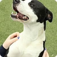 Adopt A Pet :: Wylie - Atlanta, GA