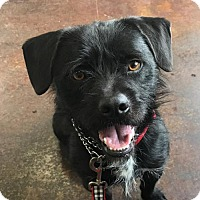 Adopt A Pet :: Rigby - Mission Viejo, CA