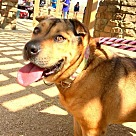Adopt A Pet :: Jill - Denton, TX