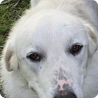 Adopt A Pet :: LEVY - Granite Bay, CA