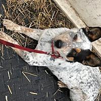 Adopt A Pet :: ACD Titan - Remus, MI