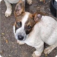 Adopt A Pet :: Wayne - Toronto/Etobicoke/GTA, ON