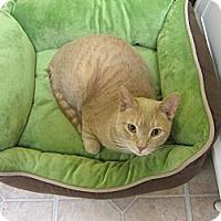 Adopt A Pet :: Morris - Mobile, AL