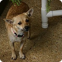 Adopt A Pet :: Sissy - Cantonment, FL