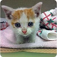 Adopt A Pet :: Louis - Secaucus, NJ