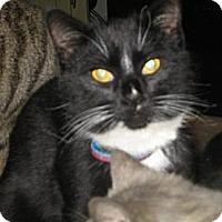 Adopt A Pet :: Figuro - Hilham, TN