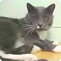 Adopt A Pet :: Luka - Lunenburg, MA