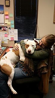 American Bulldog Mix Dog for adoption in Gainesville, Georgia - rodeo