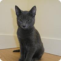 Adopt A Pet :: Sawyer - Milwaukee, WI