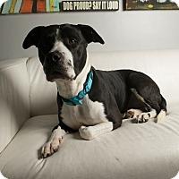 Adopt A Pet :: Bambi Bea - Inglewood, CA