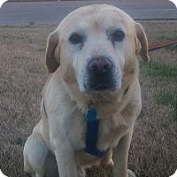 Adopt A Pet :: Jake - Union City, TN
