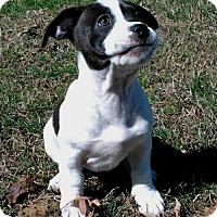 Adopt A Pet :: PUPPY JOURNEY - Allentown, PA