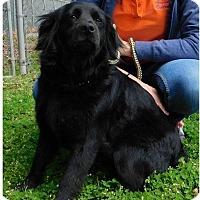 Adopt A Pet :: Ava Marie - Alpharetta, GA