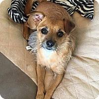 Adopt A Pet :: Hansel - Snyder, TX