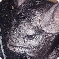 Adopt A Pet :: Fiona - Patchogue, NY