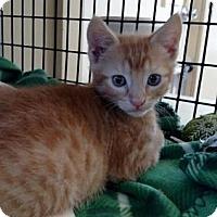 Adopt A Pet :: Izod - Freeport, FL