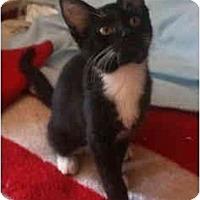 Adopt A Pet :: Gabby - Davis, CA