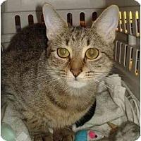 Adopt A Pet :: Angel - Chesapeake, VA