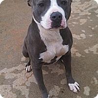 Adopt A Pet :: Savannah - Elderton, PA