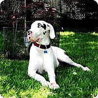 Adopt A Pet :: Sampson - Phoenixville, PA