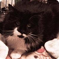 Adopt A Pet :: Puss-Quali - Hamilton, ON