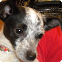 Adopt A Pet :: Kara - Fresno, CA