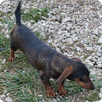 Adopt A Pet :: Picassa - Prole, IA