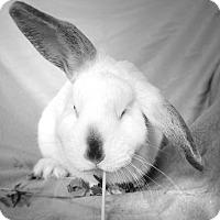 Adopt A Pet :: Gomez - Chicago, IL
