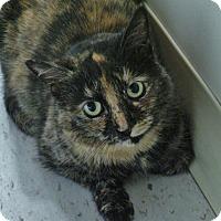 Adopt A Pet :: Erika - Chambersburg, PA