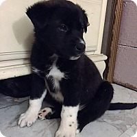 Adopt A Pet :: Charlie - Bernardston, MA