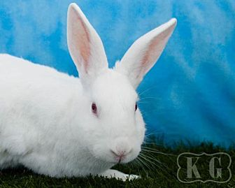 New Zealand for adoption in Pflugerville, Texas - Fresca