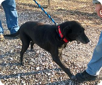 Retriever (Unknown Type) Dog for adoption in Terre Haute, Indiana - SPEEDY