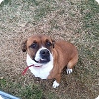 Adopt A Pet :: Hank - Owensboro, KY