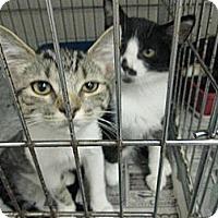 Adopt A Pet :: Max & Maxine - Chesapeake, VA