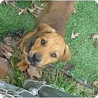 Adopt A Pet :: Jayda - Pointblank, TX