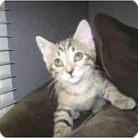 Adopt A Pet :: Aziza - Milwaukee, WI