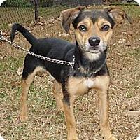 Adopt A Pet :: TRENT - ROCKMART, GA