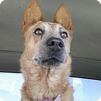 Adopt A Pet :: Ellie - Golden Valley, AZ