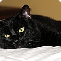 Adopt A Pet :: Maxwell - Plainville, MA