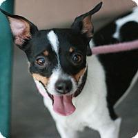 Adopt A Pet :: Astro - Canoga Park, CA