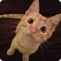 Adopt A Pet :: Purrnica - North Highlands, CA