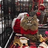 Adopt A Pet :: Genavive - Harrisburg, NC
