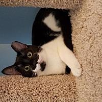 Adopt A Pet :: Elwood - Plantation, FL