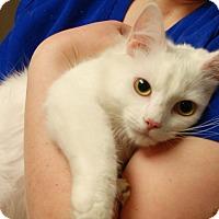 Adopt A Pet :: Snowball - Salem, WV