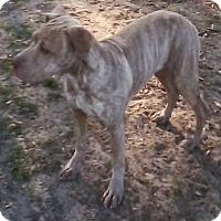 Adopt A Pet :: Marble - URGENT ! - Inverness, FL
