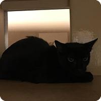 Adopt A Pet :: Oliver - Philadelphia, PA