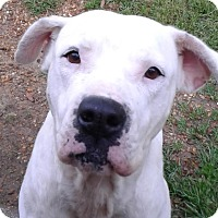 Adopt A Pet :: Caroline - Ozark, AL