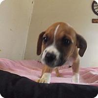 Adopt A Pet :: JoJo - Zaleski, OH