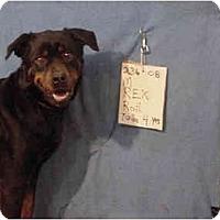 Adopt A Pet :: Rex/Rescued! - Zanesville, OH