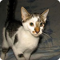 Adopt A Pet :: Bowie - Norwich, NY